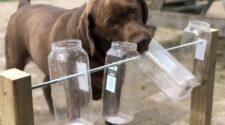 A kutyákat epizodikus-jellegű memória segíti
