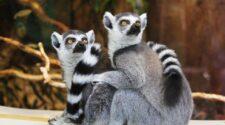 Ezek az állatok kerültek fel a kihalás szélén állók listájára