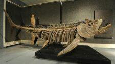Hetvenmillió éves óriáshal kövületét fedezték fel Argentínában.