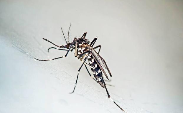 Tigrisszúnyogok felmérése - ismét a lakosság segítségét kérik