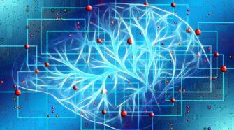 Mi befolyásolja az intelligenciát?
