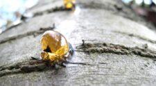 Miért vízirovar a borostyánkövekben lévő állatok negyede?