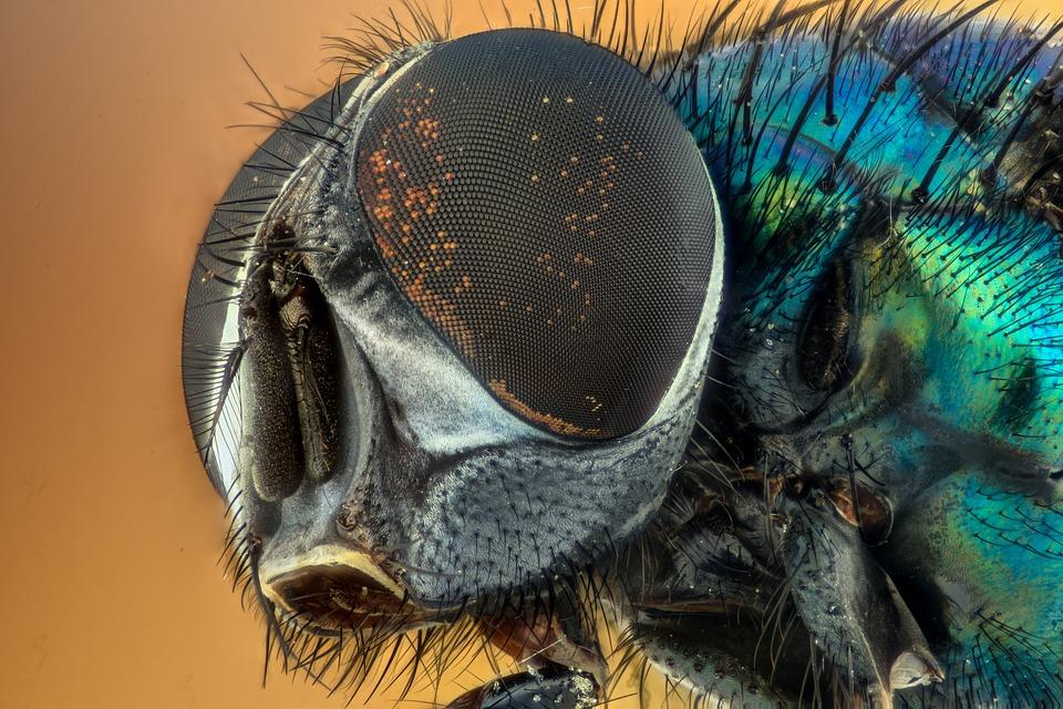 Prof. dr. Vig Károly tudományos közleményei, könyvei, előadásai számtalanszor bizonyították, hogy csodálatosak a rovarok, tanulmányozásuk érdekfeszítő és ebben mi, magyarok nagyon is élen járunk a rovartani kutatások tekintetében.