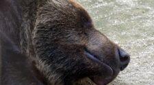 Téli álom – Miért hajtják álomra fejüket az állatok, akár egy egész évszakon át?