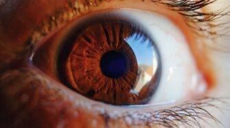 Funkcionális retina laboratóriumi körülmények között