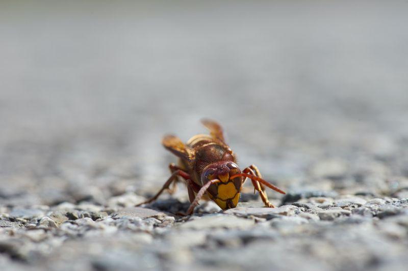 A rovarok életbevágóak az élelmiszeripar számára