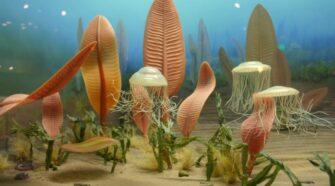 Rangeomorphák és az állatvilág harmadik útja