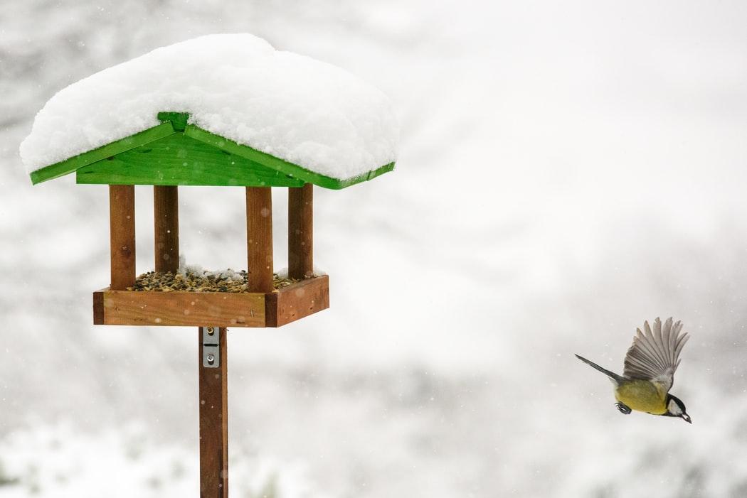 Fogadjuk el, hogy a téli madáretetés egy jól megfigyelhető ritmus a környezet és az állatok egységében!