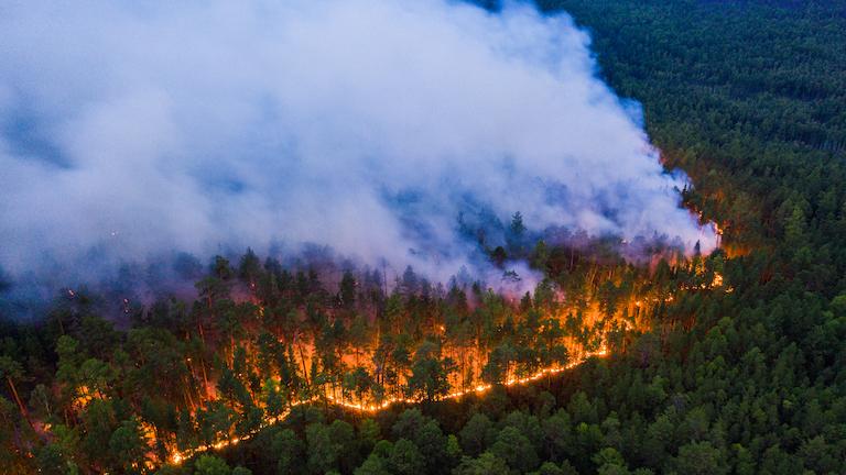 Szibériai erdőtűz - Krasznojarszki-erdőtűz, 2020 július Forrás: Greenpeace International