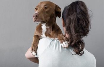 Új kutatás szerint a kutya és az ember agya eltérően súlyozza a vizuális információkat másokró, ugyanis az emberi agy érzékeny az arcokra.