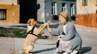 A vizsgálat megerősítette, hogy a kutyák személyiségének is van stabil komponense