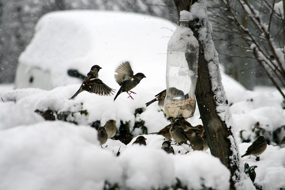 A legfontosabb mégis az, hogy ha valaki elkezdte a téli madáretetés jó szokását, akkor NE HAGYJA ABBA hirtelen.
