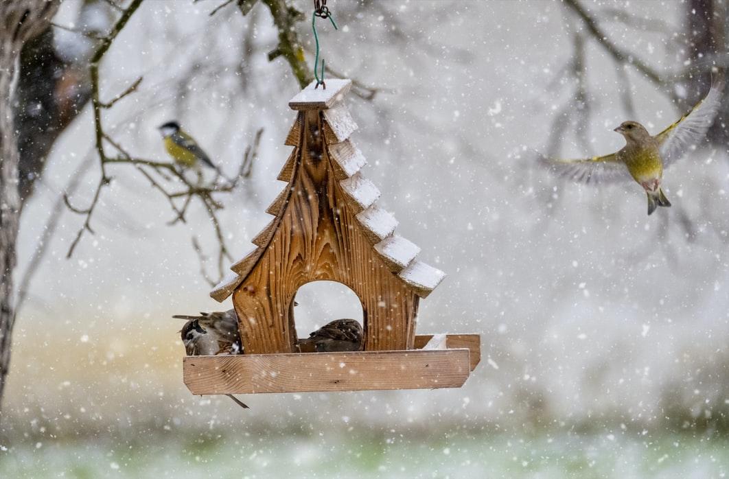 Miért nincsenek a kertünkben madarak? Téli madáretetés okosan