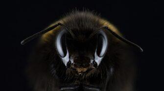 Búcsú a méhektől? – A méhcsaládok gyengülése