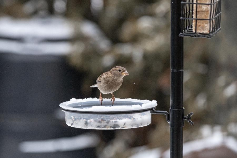 A tél a hóval és az alkalmankénti ónosesővel nehezíti meg igazán az állatok életét.