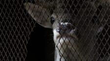 A világ első állatkínzás-ellenes büntetőjogi indexe