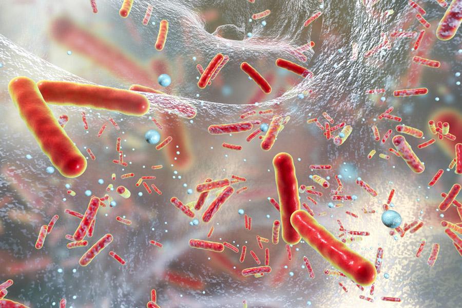 Coli baktériumok üzenetváltása ioncsatornáikon keresztül Forrás: Mind Matters News