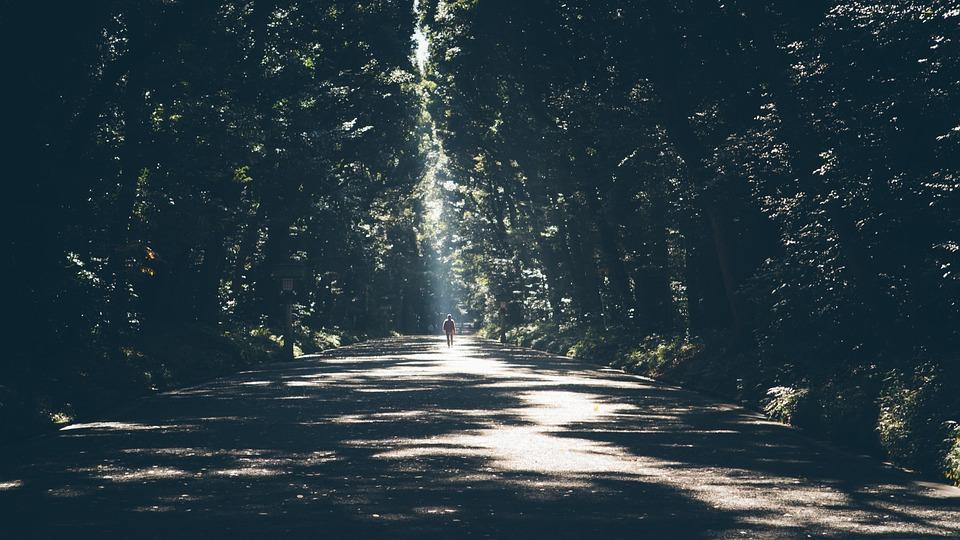 Több tonnányi ólmot tartalmazó szállóport szűrnek ki a fák levelei