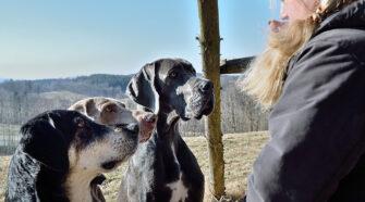 A kutyák nem tudják, hogy egy szó minden hangja számít