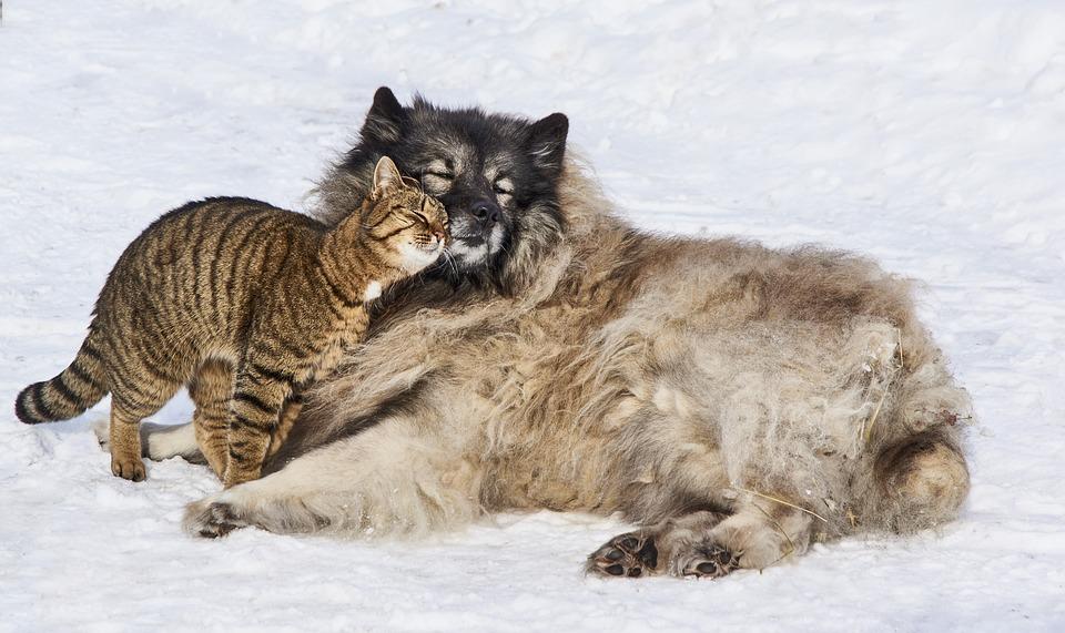 Beszélnek-e egymással az állatok?