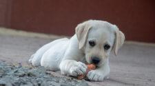 Milyen zöldséget ehetnek a kutyák?