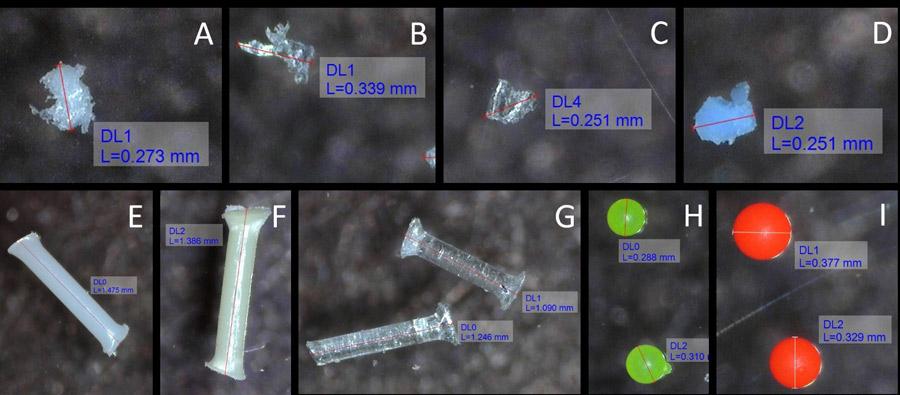A kísérletben alkalmazott mikroműanyagok 100x nagyításban. Fragmentek – A: kis sűrűségű polietilén, B: polietilén-tereftalát, C: polipropilén, D: polivinil-klorid; Szálak – E: poliamid, F: polietilén-tereftalát; G: polipropilén; Gyöngyök – polietilén 0.98 g/cm3 (H) és 1.3 g/cm3 (I) (Mári Áron, Bordós Gábor, 2020)