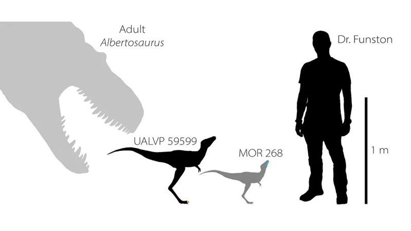 Először fedeztek fel Tirannoszaurusz embriókat