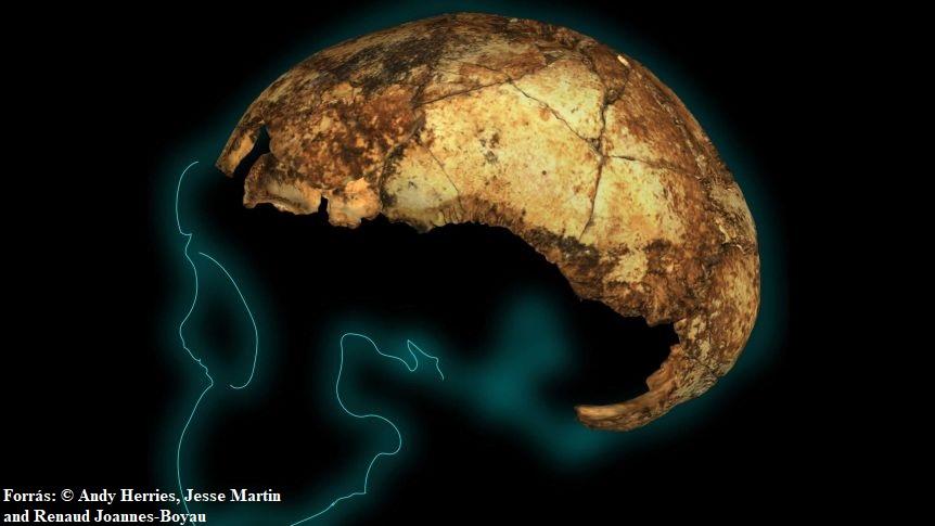 A legújabb, legrégibb homo erectus koponya felfedezése és annak hatása