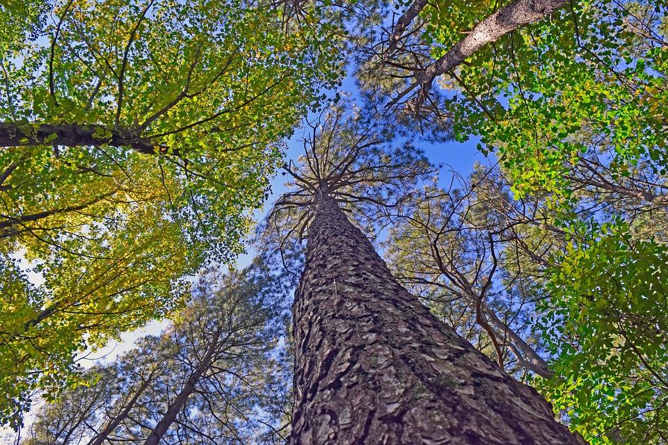 Fafelmérésbe fogott a Google a Tree Canopy Lab csoportjával!