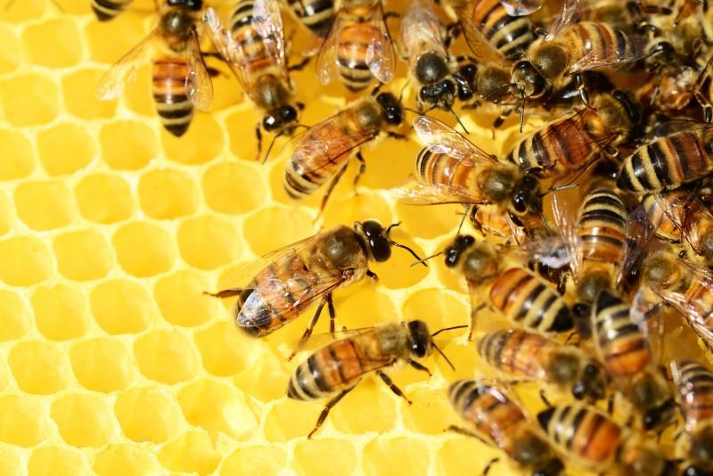 A méhek által készített méz egyre gyakrabban esik mézhamisítás áldozatául.