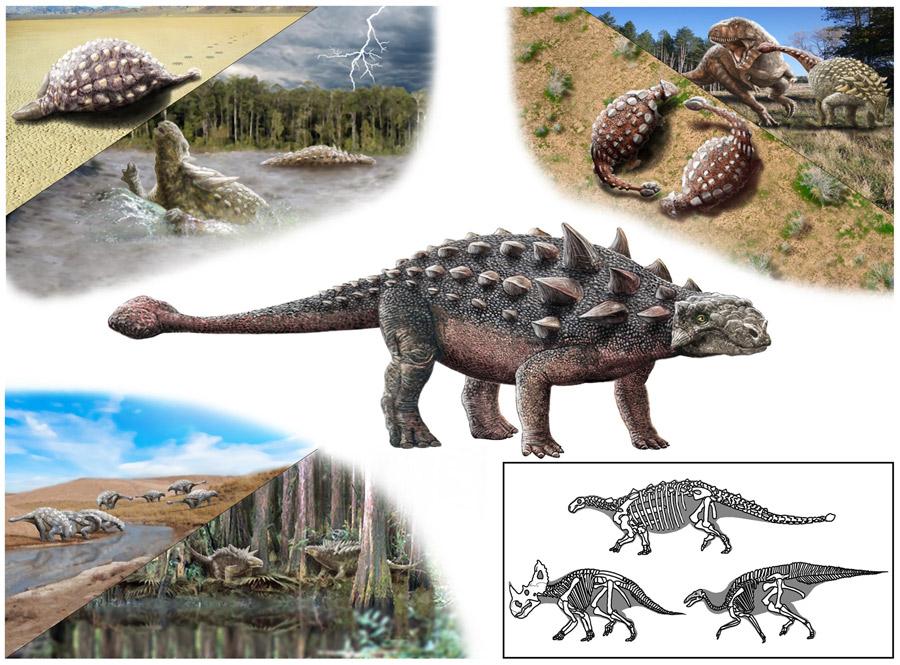 A különböző paleoökológiai, paleobiológiai és élettelen környezeti aspektusok együttes tanulmányozásával rekonstruálható az ankylosauria dinoszauruszok egykori életmódja. (Szabó Márton illusztrációja)