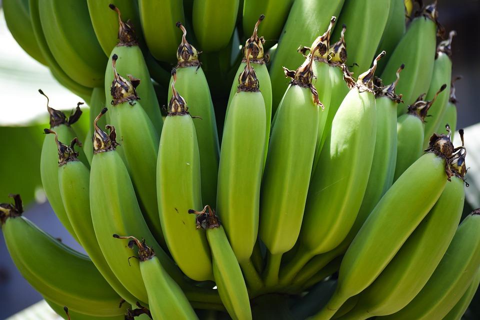Milyen egy magyarországi banánérlelő?
