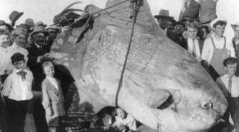 Holdhal, a hét tenger réveteg óriása
