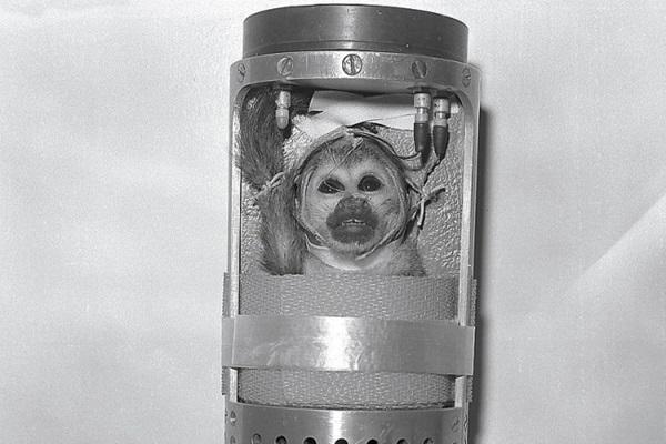 Miss Baker, a mókusmajom a termosz méretű kapszulájában. Forrás: astronomy.com