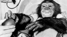 A NASA és az USAF állatai a világűrben – a majmok