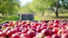 Ökológiai gazdálkodás: Magyarország dinamikusan fejlődik