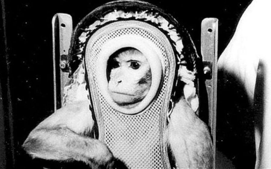 Sam a rhesusmajom. Több mint 100 km magasságig jutott fel, miközben a földi gravitáció 19-szeresét állta ki. Forrás: Ars Technica