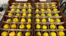 A termények 30-40 százaléka sohasem jut el a termelőtől a fogyasztóig