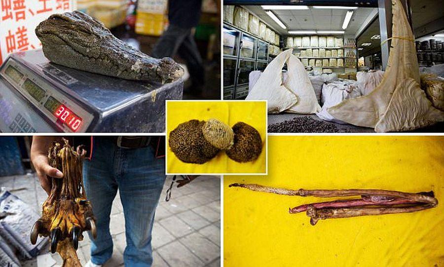 Krokodilfej, cápauszony, tigris nemiszerv és medve here. Afrodiziákumok és szerencse amulettek alapanyagai egy piacon. A vadállat-kereskedelem illegalitása mellett. Forrás: dailymail.co.uk
