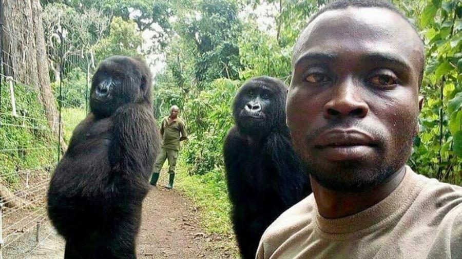 Egy 2019-es kép a kongói Virunga Nemzeti Parkból. A helyes vadállat fotózás legfontosabb kritériuma a távolság és a kényszerítés nélküli, igazi pillanat megörökítése. Forrás: ctvnews.ca