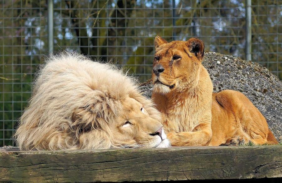Évszázadokkal ezelőtt és ma is, az ember szívesen teszi közszemlére a vadállatokat.