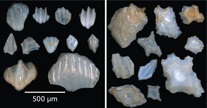 A kutatók két fő típust alkottak: barázdákkal tarkított (balra) és geometriai formájúak (jobbra).