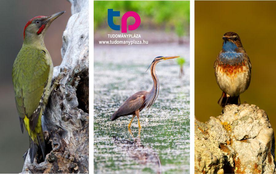 Madár - Sokszínű természet - Szavazz 2022 madarára