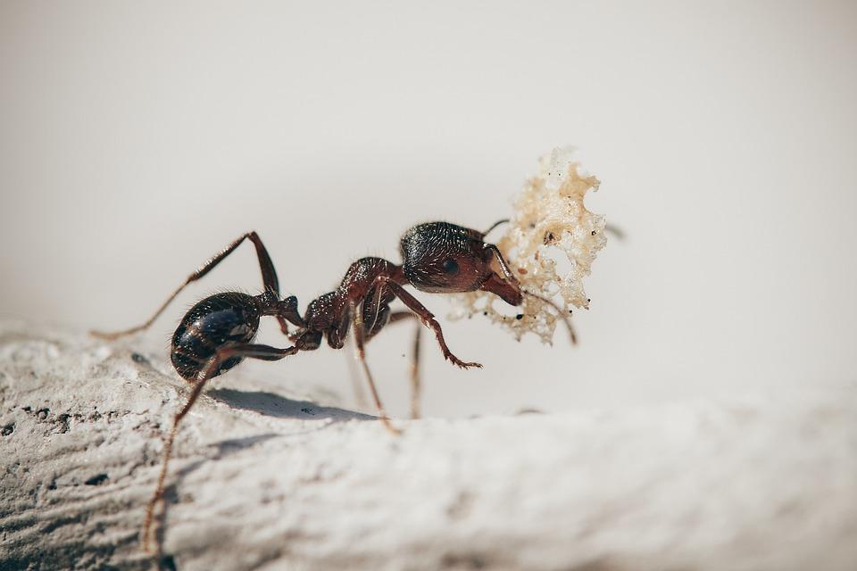 A hangyanév-katalógus jelentőségét a hangyák ökológiai fontossága adja.