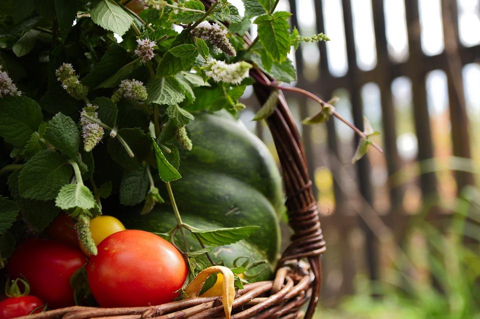 Zöldség, zöld úton – fenntartható mezőgazdasági szállítmányozás