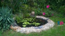 Van kis tó a kertedben? Segíts!