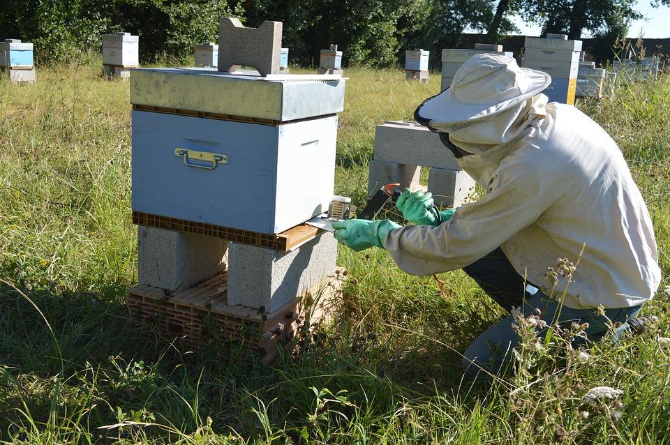 Méhatka elleni védekezés